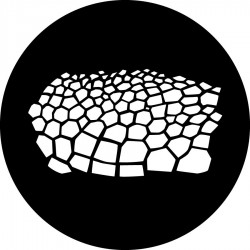 Rosco Steel Gobo - Turtle Skin