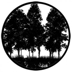 Rosco HD Plastic Gobo - Tree Silhouette 2