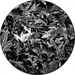 Rosco Glass Gobo - Leaves Breakup