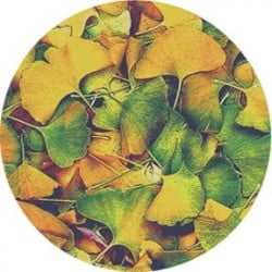 Rosco Glass Gobo - Ginko