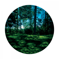 Apollo PrintScenic Glass Gobo CS0109 Meadow