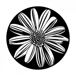 Apollo PrintScenic Glass Gobo ME1162 Simply Daisy