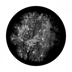 Apollo SuperRes Glass Gobo 0012 Dense Forest