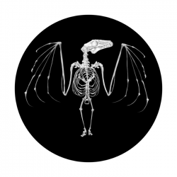 Apollo SuperRes Glass Gobo 0038 Bat Skeleton