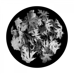 Apollo SuperRes Glass Gobo 0192 Early Fall Leaves