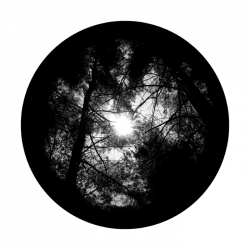 Apollo SuperRes Glass Gobo 0224 Forest Canopy