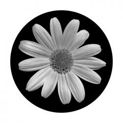 Apollo SuperRes Glass Gobo 1013 Plain Daisy