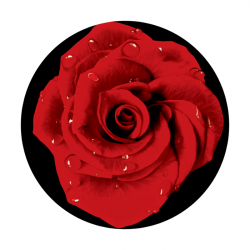 Apollo 2 Color Glass Gobo 0127 Red Rose