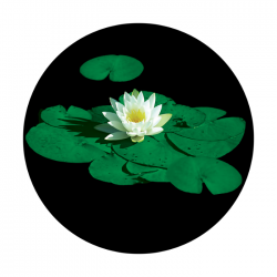 Apollo ColourScenic Glass Gobo 0029 Stunning Lily Pad