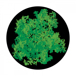Apollo ColourScenic Glass Gobo 0155 Impressionist Foliage