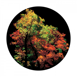 Apollo ColourScenic Glass Gobo 0161 Fall Forest