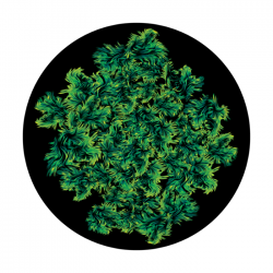 Apollo ColourScenic Glass Gobo 3443 Sulley Monster