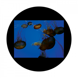 Apollo CSDS Glass Gobo 8023 D. Antonakos - Jellyfish