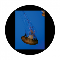 Apollo CSDS Glass Gobo 8053 D. Antonakos - Single Jellyfish