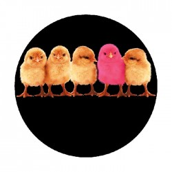 Apollo ColourScenic Glass Gobo 3414 Chicks