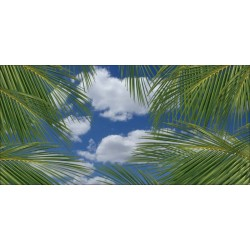 Apollo DesignScape - Clouds & Palm Leaves