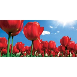 Apollo DesignScape - Red Tulips
