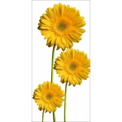 Apollo DesignScape - Yellow Daisies