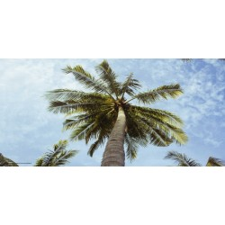Apollo DesignScape - Palm Tree