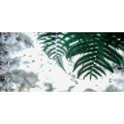 Apollo DesignScape - Rain Forest