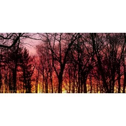 Apollo DesignScape - Sunset in the Woods