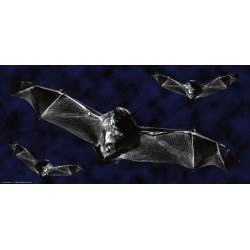 Apollo Halloween DesignScape - Three Bats
