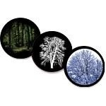 Tree & Forest Glass Gobos